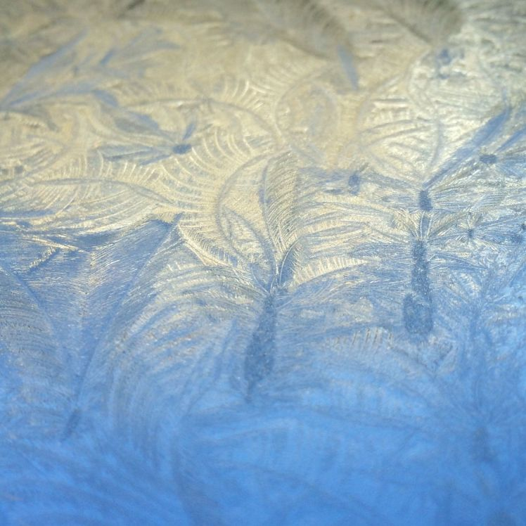 icy feathers 1